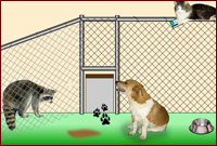 Play Animal Shelter Escape